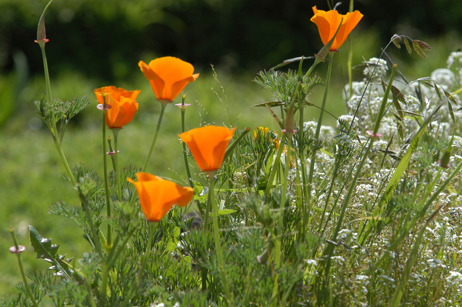 orange_flowers_bg